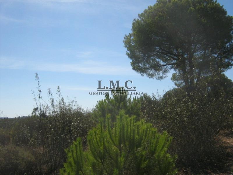 LMC INMOBILIARIA Terreno Lepe Lepe HUELVA